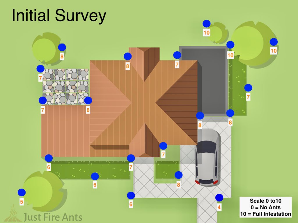 Example of what and initial survey for Little Fire Ants would look like.